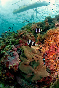 Snorkeling Tour and Cozumel Beach Party