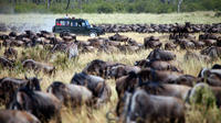 Arusha National Park: Full-Day Guided Private Tour from Arusha