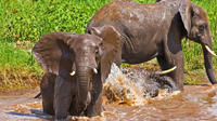 Lake Manyara National Park Guided Private Day Tour from Arusha