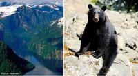 Prince of Wales Bear Viewing