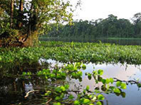 Picture of Tortuguero National Park