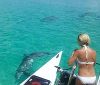 Shipwreck Snorkel and Wild Dolphin Encounter