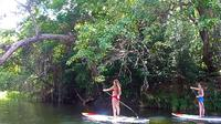 Cairns River and Rainforest Stand Up Paddleboard Tour, Cairns Water Activities