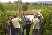 Yarra Valley Deluxe Winery Tour from Melbourne