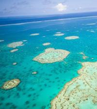 Private Helicopter Tour: Great Barrier Reef Island Snorkeling and Gourmet Picnic Lunch