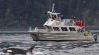 Anacortes Whale Watching
