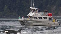 Orcas Island Whale Watching