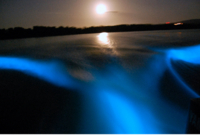 Luminous Lagoon Night Cruise in Jamaica