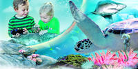 Sydney Attractions Pass : Aquarium SEA LIFE, Sydney Tower Eye, Zoo WILD LIFE, Madame Tussauds et Manly SEA LIFE Sanctuary image 1