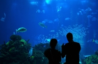 Sydney Sightseeing Pass: Aquarium, Sydney Tower Eye, Wild life Sydney and Sydney Harbour Cruise