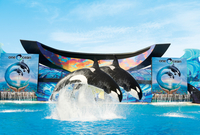 Picture of SeaWorld San Diego