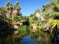 Palm Springs Wildlands Preserve Nature Tour