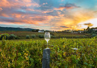 Private Full-Day Wine Country Tour from San Francisco