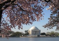 Washington DC Cherry Blossom Trees and Monuments Tour