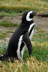 Punta Arenas Shore Excursion: Otway Sound Penguin Colony Tour