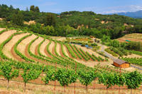 2-Day Muir Woods and Wine Country Tour from San Francisco Picture