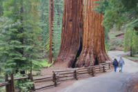 2-Day Yosemite National Park Tour from San Francisco