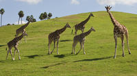 Theme Park Transportation: San Diego Safari Park