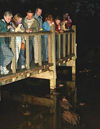 Gatorland Nights Shining Tour