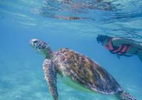 Turtle Snorkeling Adventure from Cancun