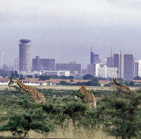 Private Tour to Nairobi National Park and Animal Orphanage
