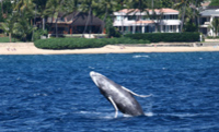 Oahu Whale Watching Cruise
