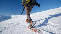 Guided Snowshoe Trip image 1