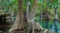Hike, Swim and Drink in Mangrove National Forest
