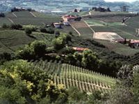 Private Tour: Piedmont Wine Tasting of the Barolo Region - Turin, Italy