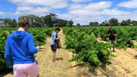 Private & Premium Barossa Valley Wine Journey
