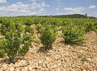 Private Rhone Valley Wine Tour from Avignon: Chateauneuf-du-Pape and Tavel