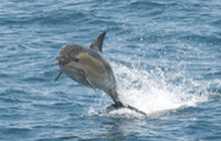 Auckland's Whale and Dolphin Safari Cruise