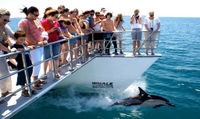 Picture of Auckland's Whale and Dolphin Safari Cruise