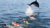 Dolphin Encounter in the Bay of Islands, Paihia Water Activities
