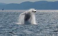 Full-Day Whale Watching Cruise from Montreal
