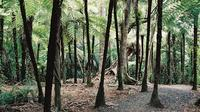 Auckland Shore Excursion: Small-Group Coast and Rainforest Tour, Auckland CBD Tours and Sightseeing