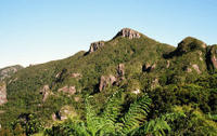 Great Barrier Island Tour including return flights from Auckland, Auckland CBD Tours and Sightseeing