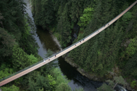 Capilano Suspension Bridge Including the Treetops Adventure and Cliffwalk