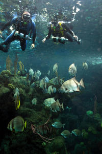 Swim with the Fishes at The Florida Aquarium in Tampa Bay