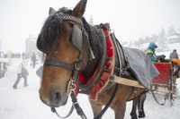 Picture of Lake Tahoe Sleigh Ride