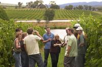 Small Group Half-Day Wine Tour from San Francisco