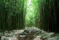 Bamboo Forest Hiking Trek