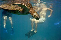 Turtle Reef Kayak Tour and Maui Surf Instruction 101