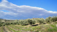 Private Wine Tasting Peloponnese Countryside Tour including Lunch a la carte