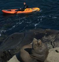 Picture of La Jolla Whale Watching Kayak Adventure