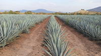 Day Trip to Tequila with Visit to Casa Sauza Distillery