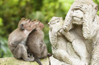 Bali Monkey Forest, Mengwi Temple and Tanah Lot Afternoon Tour