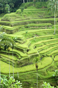 Bali Pura Luhur Batukaru Temple and Cultural Small Group Tour