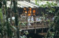 Small-Group Tour: Bali Rainforest by 4WD