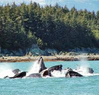 Juneau Whale Watching Adventure and Mendenhall Glacier Tour